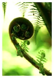 Life began as a spiral, like a fern.