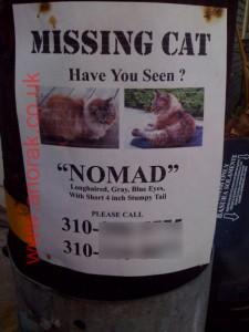 """Katt ved navn """"Nomad"""" er savnet."""