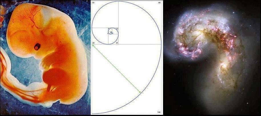 Et fosters utvikling og en galakse i utvikling.