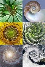 PHI-spiralen finner vi igjen i all skapelse.