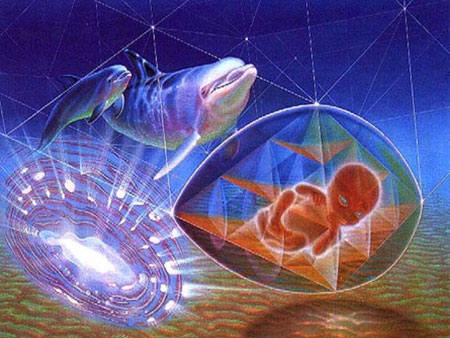 Det kan virke som delfiner opererer på høyere frekvenser og dimensjonsnivåer som gjør dem i stand til mirakuløse ting.