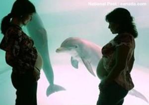 Delfiner viser en særegen interesse for gravide kvinner og barn.