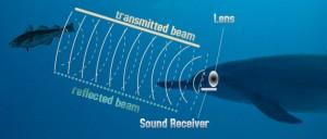 Delfiners delikate system