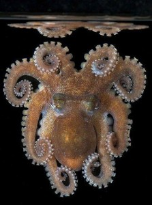 En blekksprut er tydelig bygget opp på fibonacci-spiraler :)