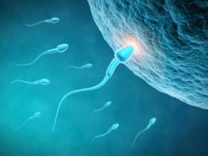 eggcelle