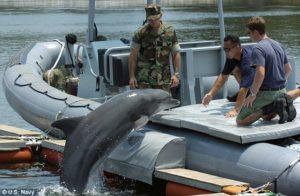 delfinkrig